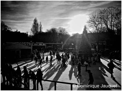 © Dominique Jauquet - Winter in het Park-39